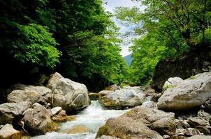 Gebirgsbach und der schöne Wald von Okutama