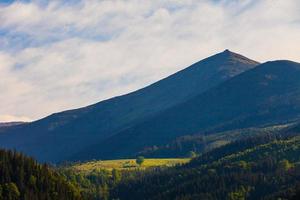 Bergsommerlandschaft. Bäume in der Nähe von Wiese und Wald