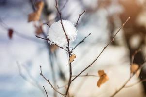 schneebedeckte Pflanzen im Winterwald bei Sonnenuntergang