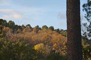 foret corse