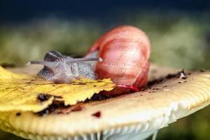 Schnecke und Pilz foto