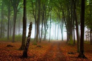 neblige Tage im Wald