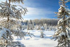Winterlandschaft mit Wald und blauem Himmel foto