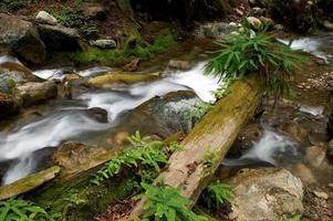 Gebirgsbach fließt durch den Wald.