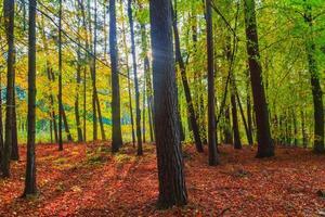 Herbsttiefen Waldbäume bunte Blätter foto