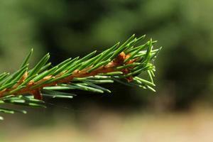 grüne Natur foto