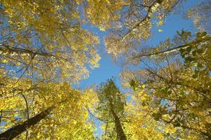 Buchenwalddetail im Herbst mit warmem Ton. Spanien