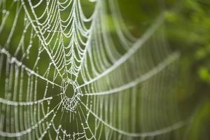 Spinnennetz mit Wassertropfen darauf foto