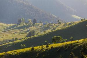 Bergsommerlandschaft. Bäume in der Nähe von Wiese und Wald foto