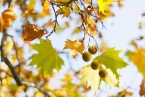 Herbsthintergrund foto