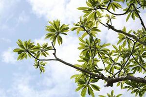 Zweige und grüne Blätter. foto
