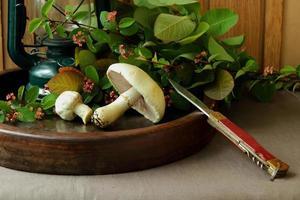 Stillleben mit Pilzen und einem Messer. foto