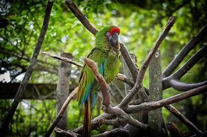 Papagei auf Baum foto