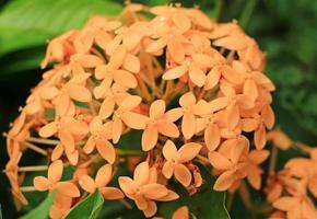 orange Flowe