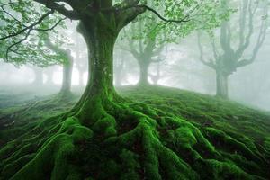 Baum mit verdrehten Wurzeln foto