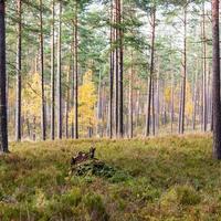 bunte Herbstbäume im grünen Wald mit Sonnenstrahlen