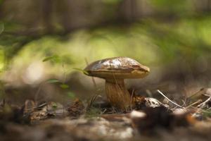 Pilze in einem Herbstwald an einem sonnigen Tag foto