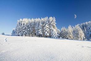 Schneefeld und Wald unter blauem Himmel mit Halbmond foto