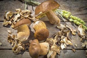 Steinpilze edilus Pilze auf einem Holztisch