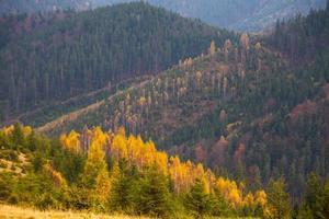 schöne herbstlandschaft in bergen karpaty im wald