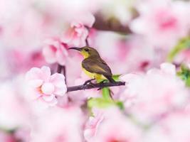 Sonnenvogel. foto
