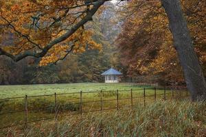 Herbst im Park. foto