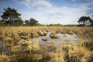 Sumpf mit Torfmoos foto