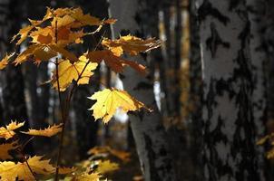 Herbst, foto