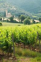 altes Kloster Sant'antimo unter den Weinbergen in der Toskana, Italien