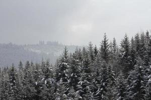 schwarzzwald foto