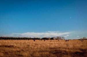 Landscepe in Russland foto