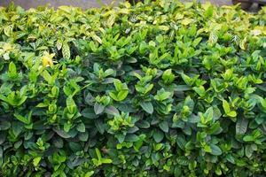 grüne Blätter Textur foto