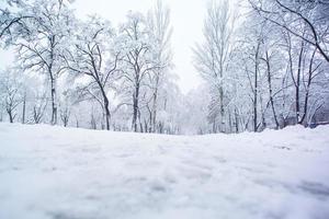 schneebedeckter Baum foto