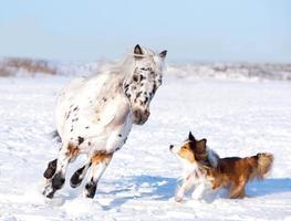 Pony und Hund spielen foto