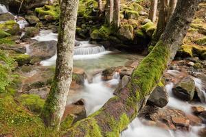 Unterwälder