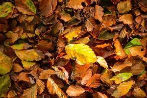 Herbst verlässt Hintergrund foto