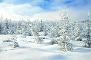 ländliche Winterlandschaft mit dem Wald und dem blauen Himmel