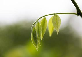 das frühlingsgrüne Blätter in einem Wald im Sonnenlicht