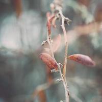 nasse Pflanzenzweige im Winterwald - Retro-Vintage-Effekt