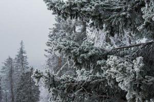schneebedeckter Wald an den Hängen des Berges. foto
