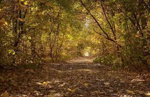 schöne bunte Baumgasse im Wald, herbstlicher natürlicher Hintergrund