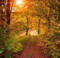 bunter Herbstsonnenaufgang im Wald mit alter Straße foto