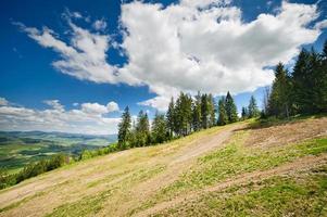 grüne Blumenwiesen in den Karpaten