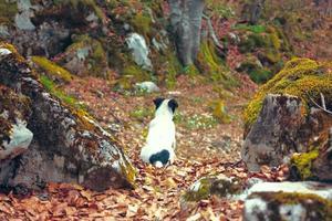einsamer kleiner weißer Welpe bleibt im Wald zurück foto