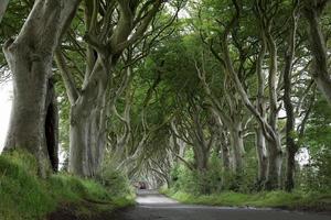 baumallee dunkle hecken in irland foto