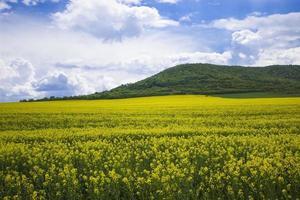 Feld voller Blumen foto