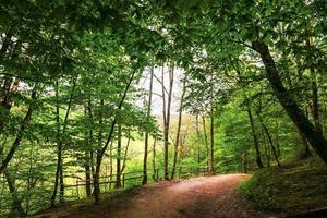 Landschaften Wald Farbe Schönheit Natur Baum grün Landschaften Woodlan