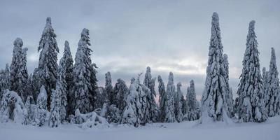 Fichtenwald von Schnee in der Winterlandschaft bedeckt foto