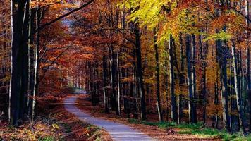 Landschaftsansicht des bunten Laubes und der Straße des Herbstwaldes
