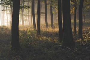 schöne Morgenszene im Wald mit Sonnenstrahlen
